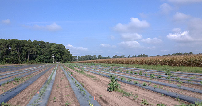 Henry-Farm Beaufort County Rural and Critical