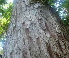 Okatie Regional Preserve Update