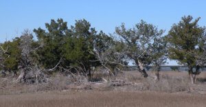 Widgeon-Point-Preserve - Beaufort County Rural and Critical