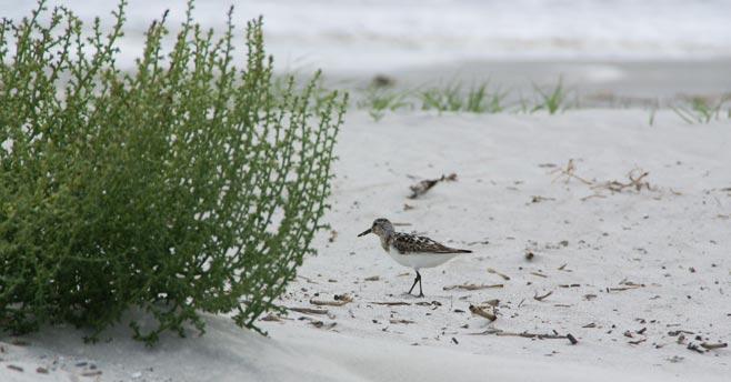 Mallory-Baches---beach-sized