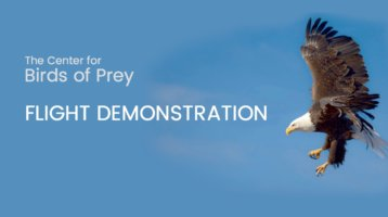 Birds of Prey Flight Demonstration