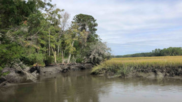 Pineview Tract on Lady's Island Purchased by Beaufort County